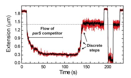 Theme-ParB-condensation