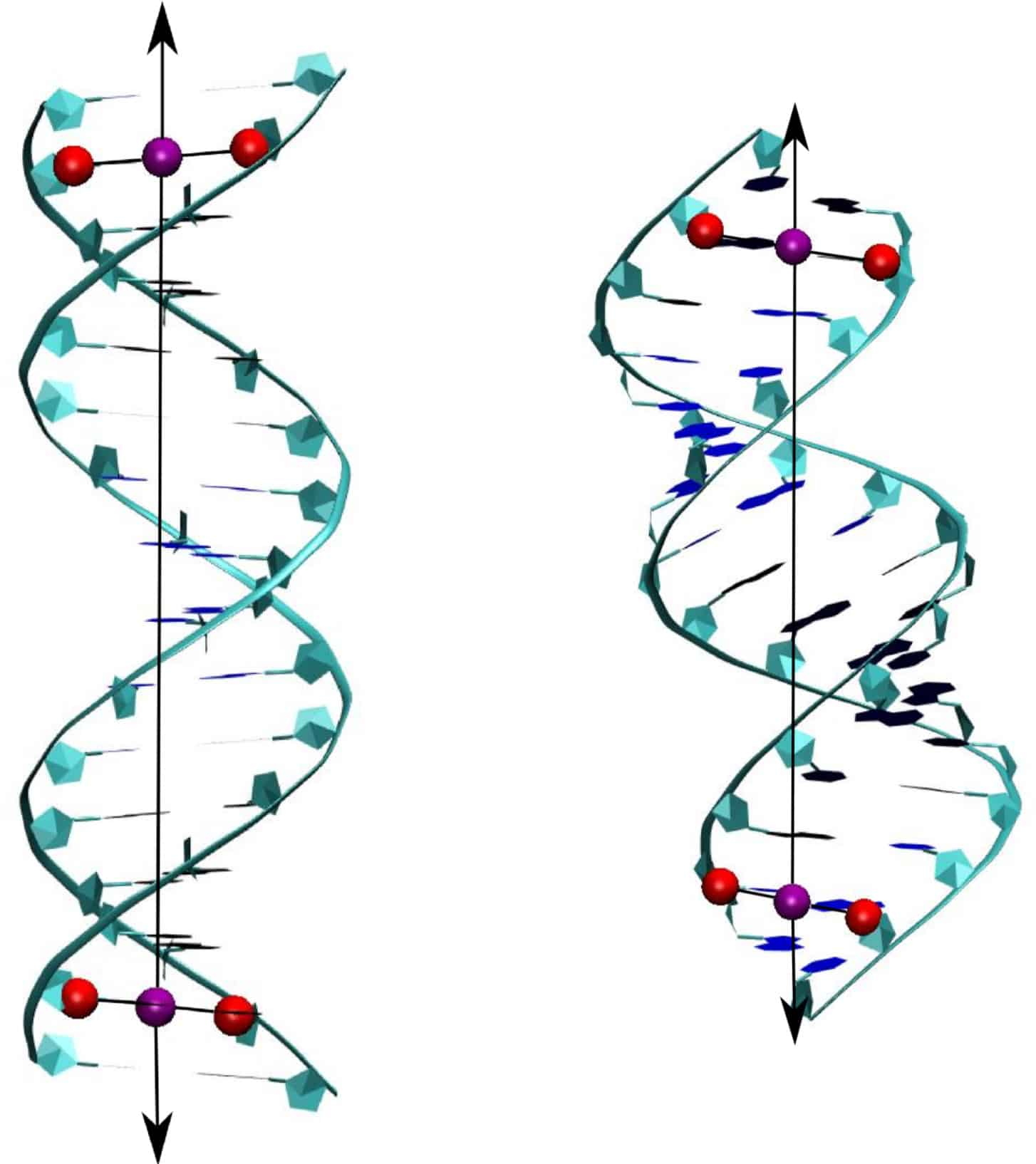 MD Simulations Of Nucleic Acids